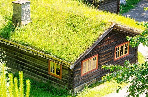 Trồng cây trên mái - giải pháp chống nóng mái tôn thân thiện với môi trường
