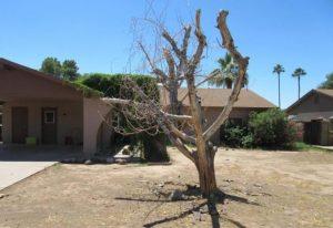 cây khô
